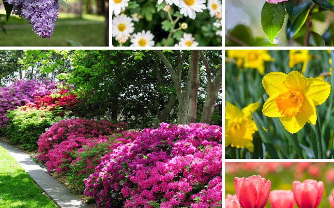 Spring Blooms Worth Planting in Your NC Backyard